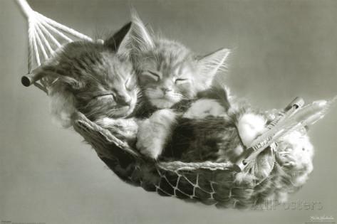 keith-kimberlin-kattungar-i-gungmatta-kittens-in-a-hammock