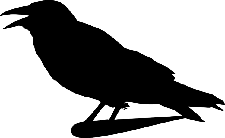 crow-309517_1280.png